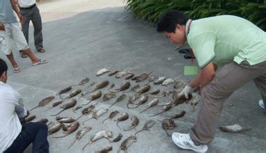 北京灭老鼠公司